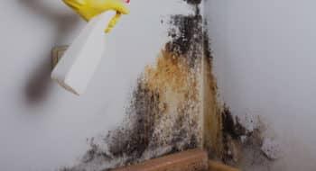 طرق فعالة للتخلص من عفن الجدران بشكل نهائي